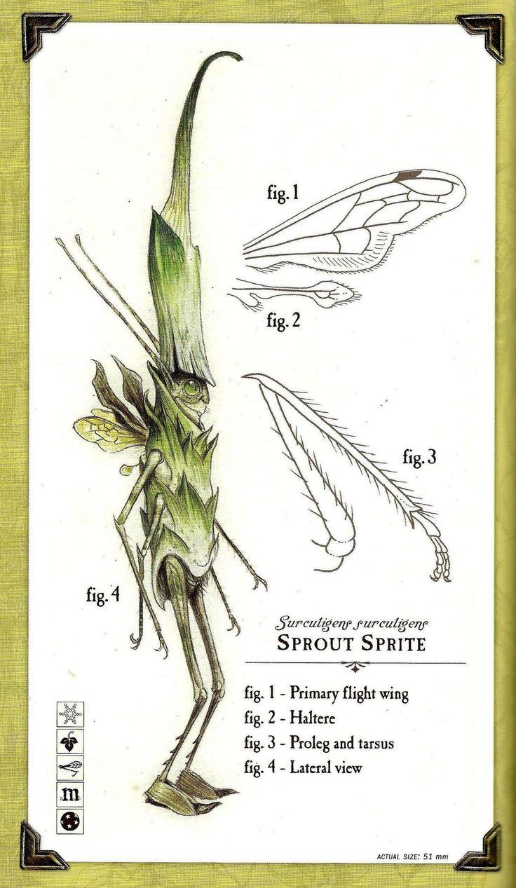spiderwick the field guide epub