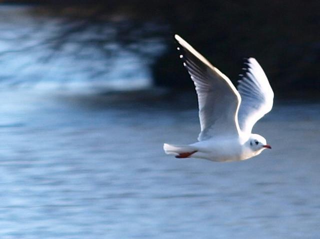 j bennett flying epub free