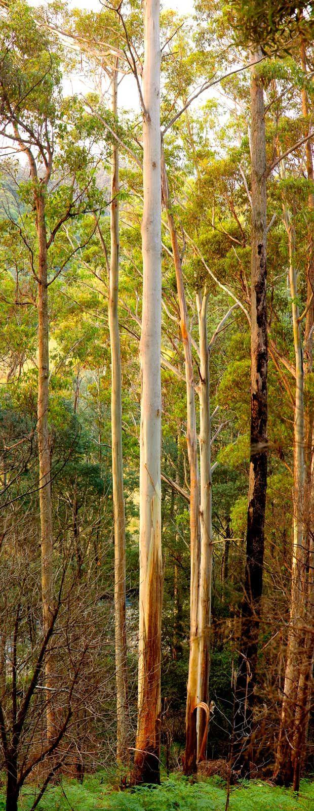 growing up asian in australia epub bud